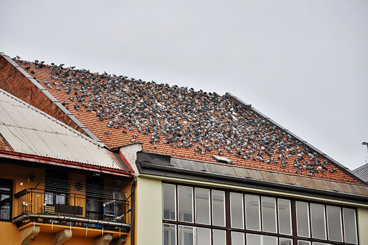 A2B Pest Control are able to install spikes to deter birds from roofs in Haringey.