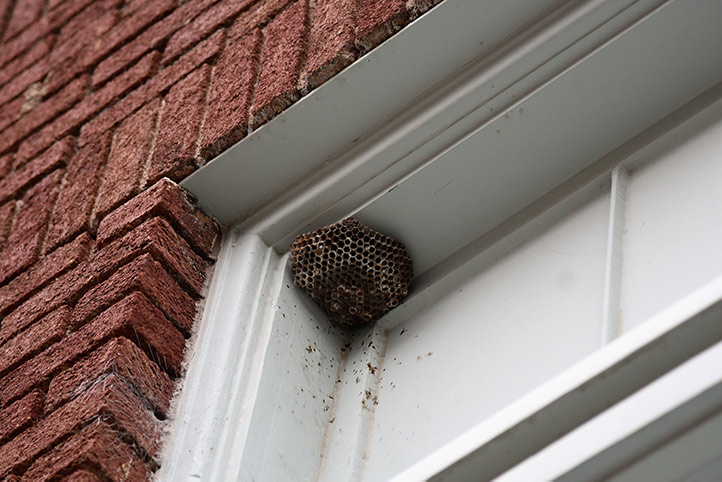 We provide a wasp nest removal service for domestic and commercial properties in Haringey.